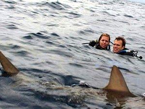 zdjęcie z filmu Ocean strachu