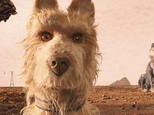 zdjęcie z filmu Wyspa psów, reż. Wes Anderson