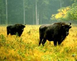 Szokujące skutki koronawirusa wśród leśnych zwierząt!