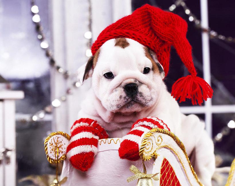 zwierzęta w świątecznych przebraniach