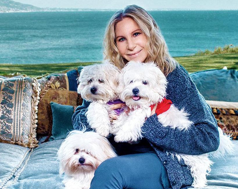 Barbra Streisand sklonowała dwukrotnie nieżyjącą suczkę Samanthę