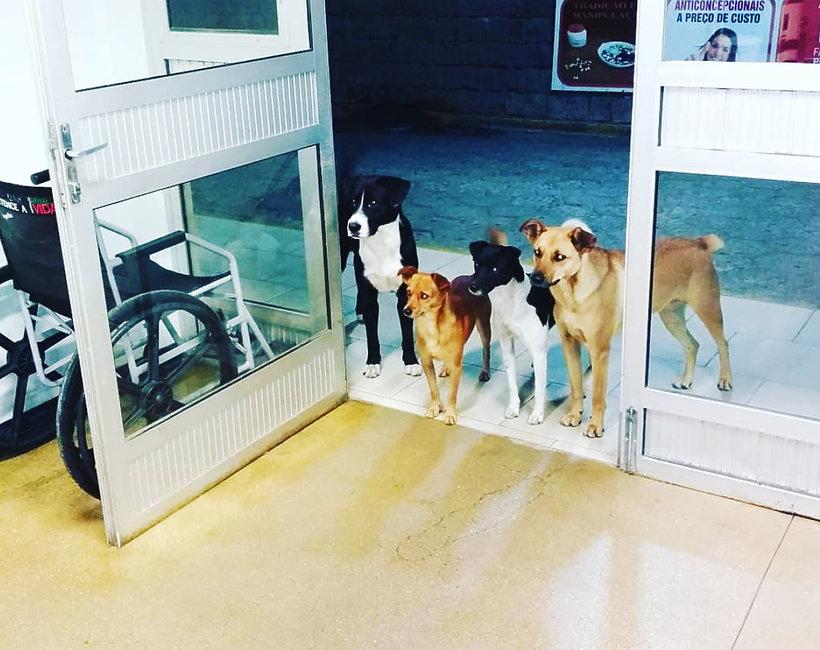 Brazylia: psy czekały na swojego pana pod drzwiami szpitala