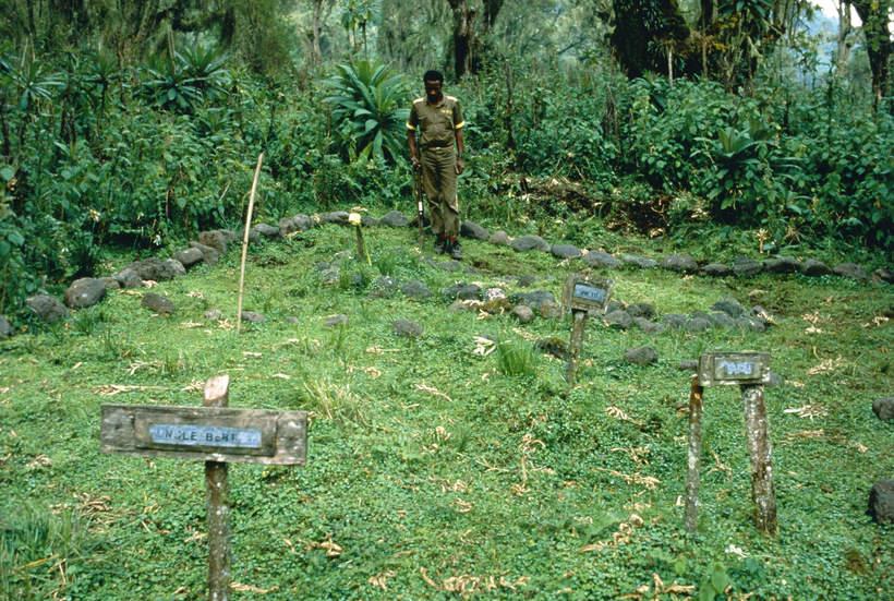 Dian Fossey, cmentarz, na którym jest pochowana wraz z gorylami, Goryle we mgle, 1988 rok