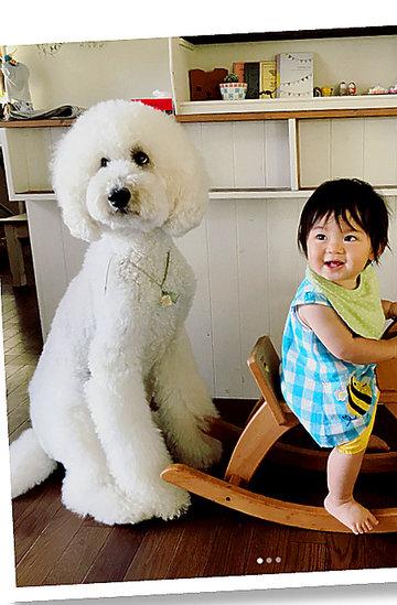 Dziewczynka i jej pudelek, dzieci i zwierzęta, psy, niezwykła relacja