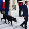 Emmanuel Macron i Brigitte Macron mają nowego psa. Pupil Macronów w Pałacu Elizejskim