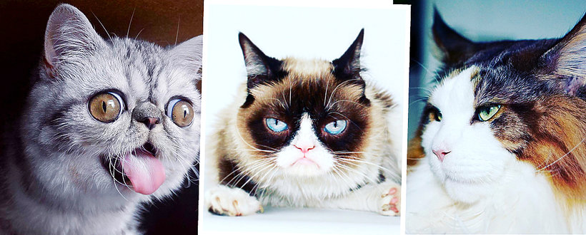 Herman, Grumpy Cat, Samson