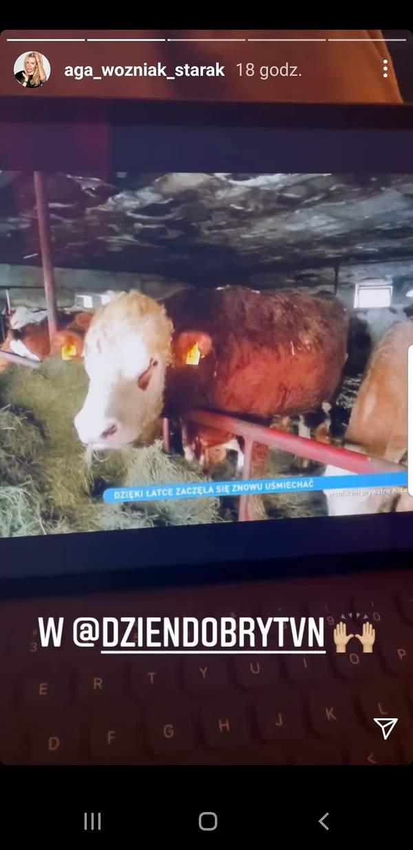Krowa łatka, Instagram Agnieszka Woźniak-Starak
