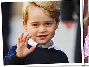 Książę George, jamnik