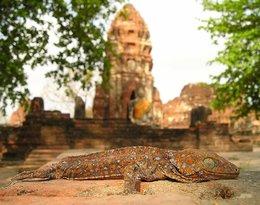 Laos, Azja, Azja Express