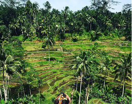Macademian Girl na Bali