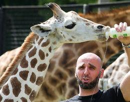 Marcin Gortat, żyrafek Gortat, żyrafa Gortata nie żyje, Zoo w Warszawie