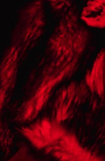 Natasza Urbańska przeszła spektakularną metamorfozę i wraca z nową płytą!