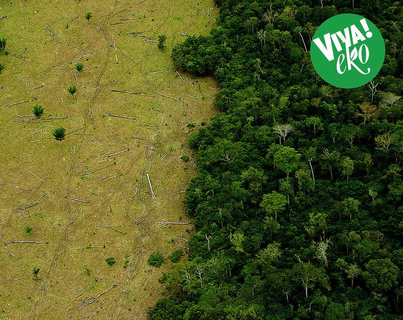 Raj utracony: zdjęcie zniszczonej planety ziemi