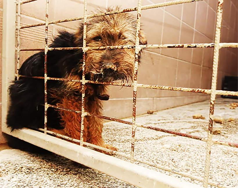 Schronisko w Radysach, psy, pies