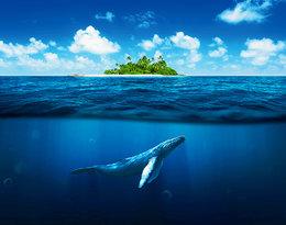 Ocean wyrzucił na brzeg martwego wieloryba.Co było przyczynąjego śmierci?