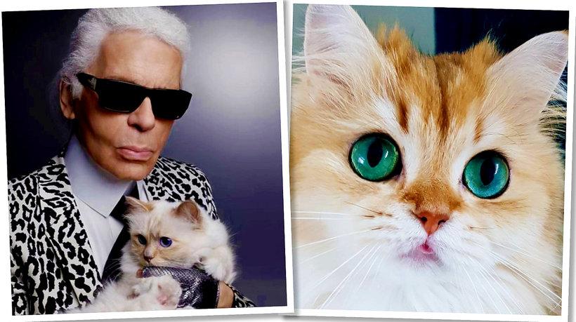 #CatsOfInstagram, czyli najpopularniejsze koty na Instagramie