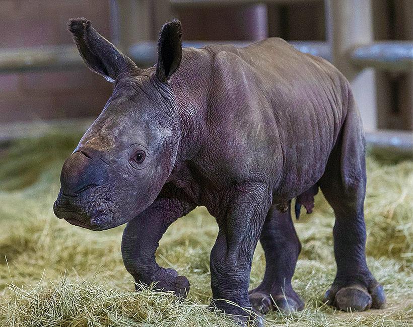 Historyczne narodziny w zoo