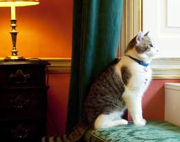 Poznajcie kota z Downing Street – od 8 lat pełni służbę w rezydencji brytyjskich premierów!