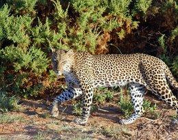 Kenia: Masai Mara