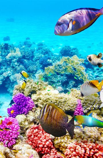 Najpiekniesze rafy koralowe