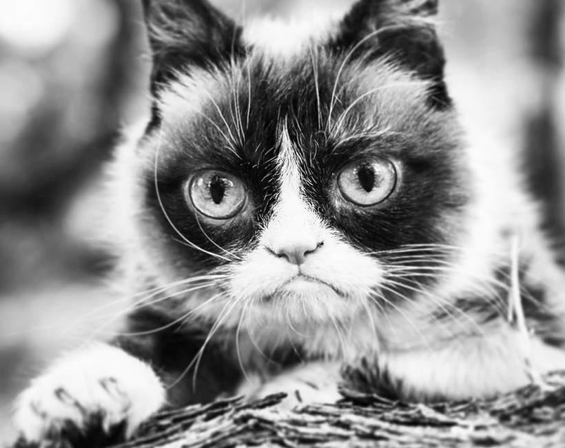 Nie żyje Grumpy Cat