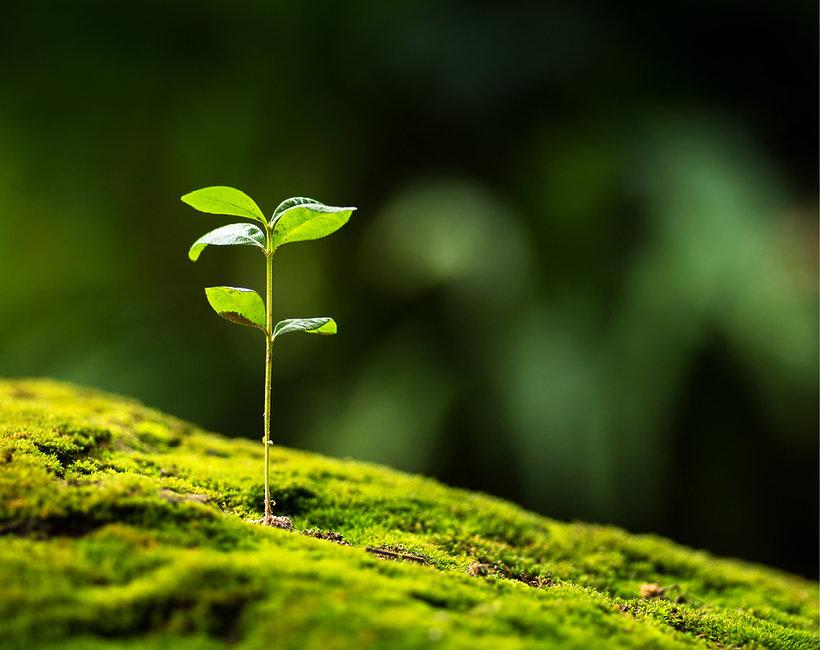 Oto sposoby jak być bardziej eko