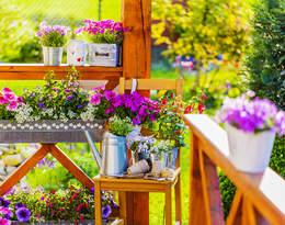 Zamień balkon w oazę zieleni. Oto 20 roślin, których nie może na nim zabraknąć!