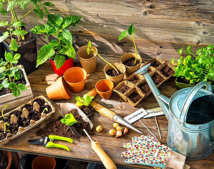 Sadzonki warzyw w domu