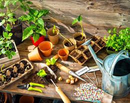 Domowa uprawa awokado? A może mały warzywniak? To prostsze niż myślisz!