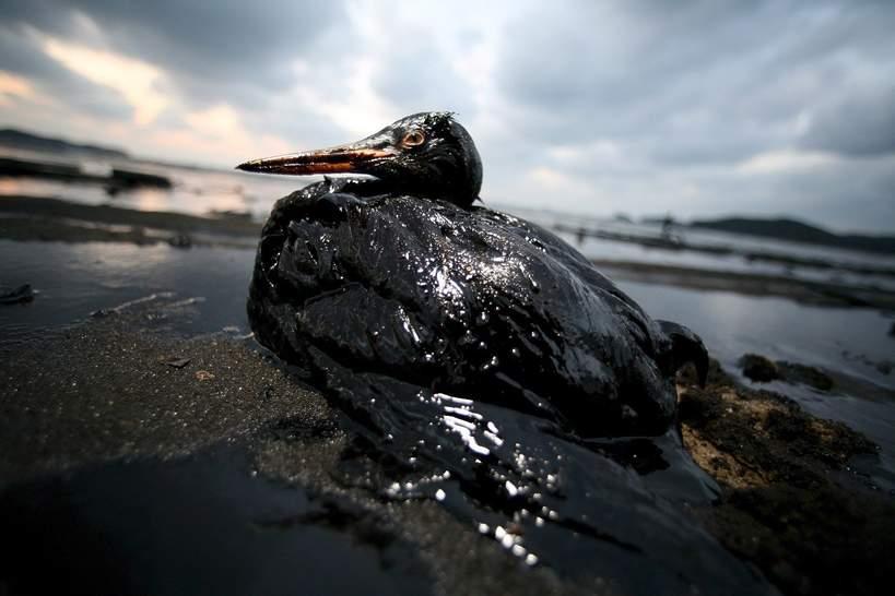 VIVA Eko jak ludzie niszcza ziemie ekologia srodowisko