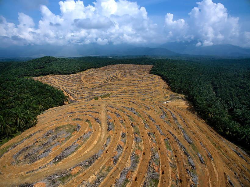 VIVA Eko jak ludzie niszcza ziemie ekologia srodowisko plantacje