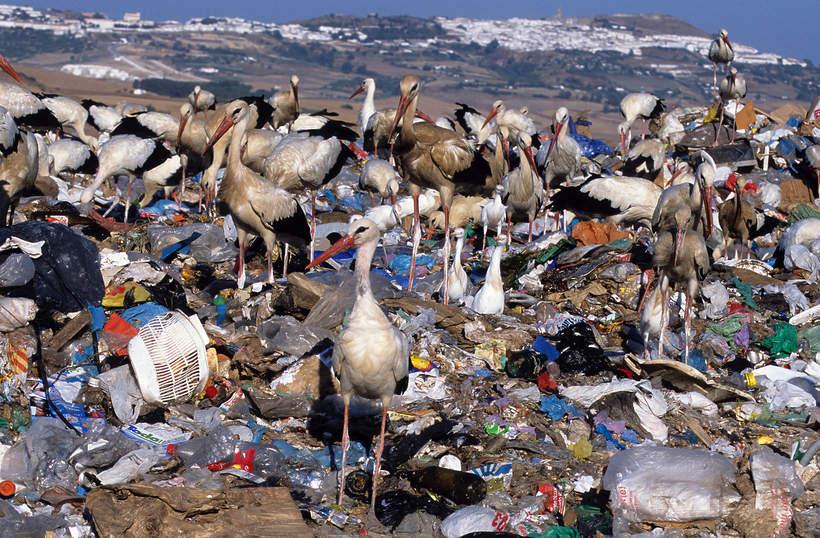 VIVA Eko jak ludzie niszcza ziemie ekologia srodowisko zwierzeta wysypiska