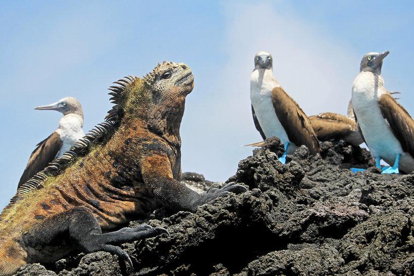 Wyspy Galapagos zagrożone