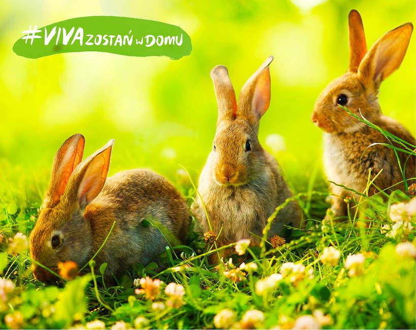 Zajączek czy królik - Wielkanoc
