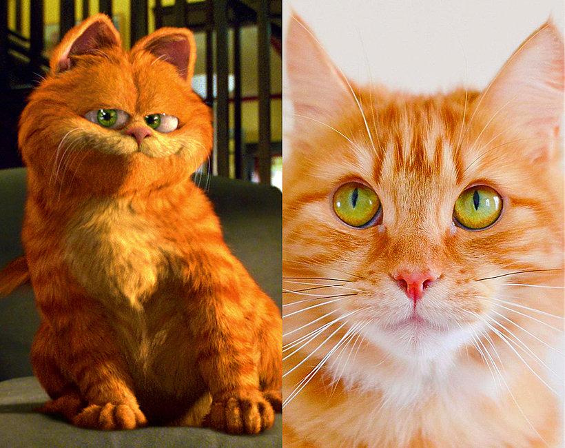 Zobacz rude koty z Instagrama