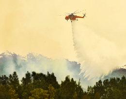 Pożar w Australii – zobacz najbardziej wstrząsające zdjęcia!