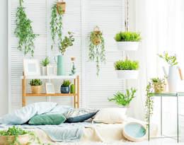 Rośliny oczyszczające powietrze – nie może ich zabraknąć w Twoim mieszkaniu!