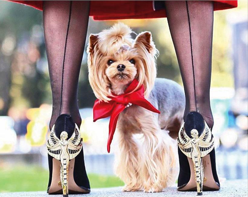 Najmodniejszy pies świata