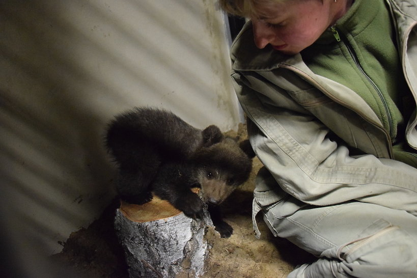 Niedźwiadek Cisna z poznańskiego zoo