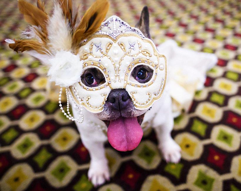 pokaz mody dla psów w Nowym Jorku