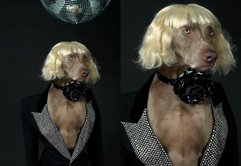 """Psy w sesji mody we Fancuskim """"Vogue'a"""""""
