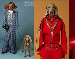 """Francuski """"Vogue'a"""" walczy o prawa zwierząt przebierając psy w… sukienki Chanel! Dobry pomysł?"""