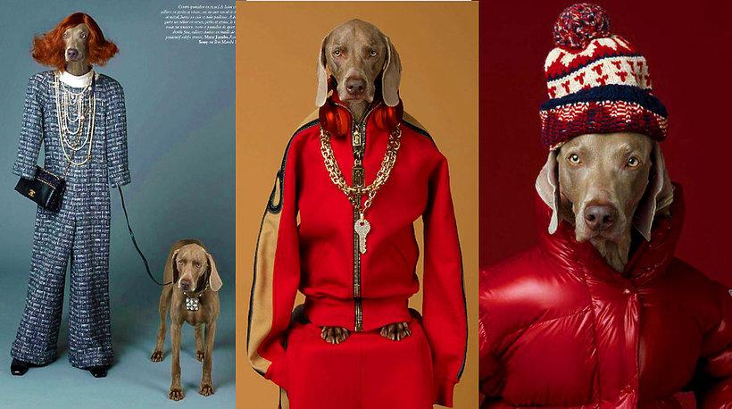 "Psy w sesji mody we Fancuskim ""Vogue'a"" - MAIN TOPIC"