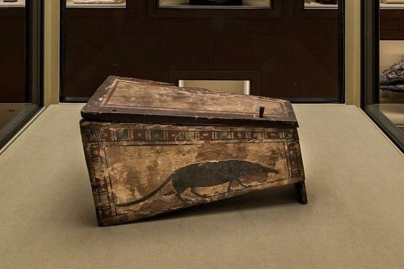 Reżyser Wes Anderson przygotował zdumiewającą wystawę w Wiedniu Spitzmaus Mummy in a Coffin and other Treasures