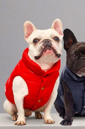 Ubranka dla psów luksusowej marki Moncler