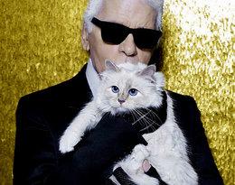 """Ukochana kotka Lagerfelda """"wydała"""" oświadczenie na Instagramie!"""