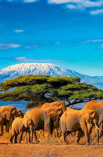 W podróż do Kenii zaprasza nowa VIVA!MODA!